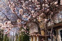 GS_April_05